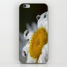 Daisy reflections iPhone & iPod Skin