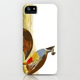 Scientific Bird Illustration iPhone Case