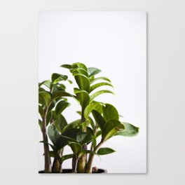 ZZ Zenzi  |  The Houseplant Collection Canvas Print