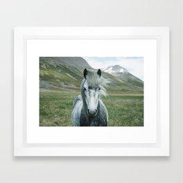 Grey Horse Framed Art Print