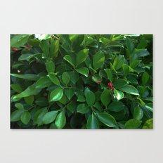 Green tropical foliage Canvas Print