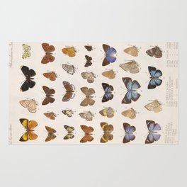 Vintage Scientific Insect Butterfly Moth Biological Hand Drawn Species Art Illustration Rug