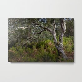 Laurisilva, primeval forest in the midlands of Madeira Metal Print