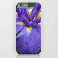 Purple Iris Flower Slim Case iPhone 6s