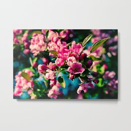 Pink Crab Apple Flowers Metal Print