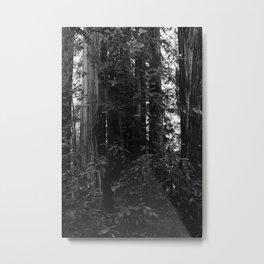 Redwood Forest VII Metal Print
