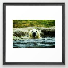 Young Pole Bear Swimming Framed Art Print