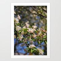 Blossoms 3 Art Print