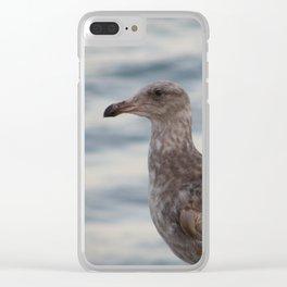 Young Gull in Malibu Clear iPhone Case