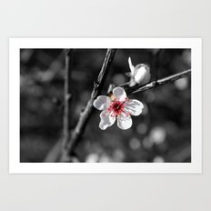 Blossoming Pink Art Print