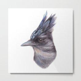 Steller's Jay | Watercolour | Painting | CYANOCITTA STELLERI | Animal Metal Print