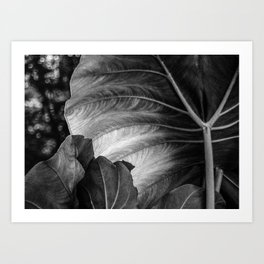 What Light Reveals Art Print