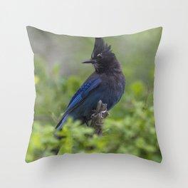 Steller's Jay near Park City, Utah Throw Pillow