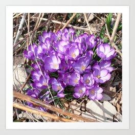 Watercolor Flower, Purple Crocus 01, Washington D.C., Spring Delights! Art Print