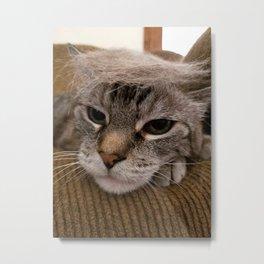 Comb Over Cat Metal Print