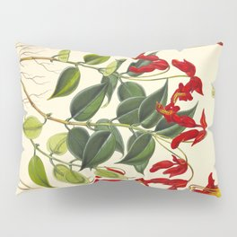 Red Himalayan Flowers Green Leaves Vintage Scientific Botanical Illustration Pillow Sham