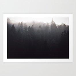 Misty Forest II Art Print