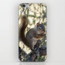 Soldotna Red Squirrel iPhone Skin