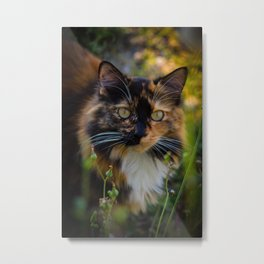 Calico Cat in the Grass Metal Print