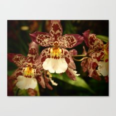 Orchids IV Canvas Print
