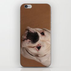 My dog Konstantin iPhone & iPod Skin
