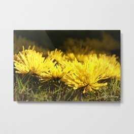Beautiful Yellow  Metal Print