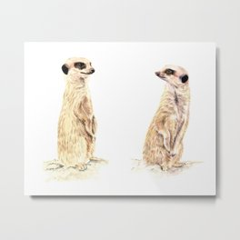 Two Meerkats Metal Print