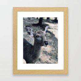 Deer Nara Framed Art Print