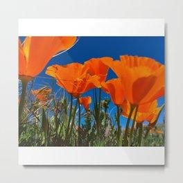 Poppies Flowers Metal Print