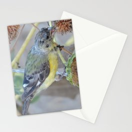 Lesser Goldfinch after Sunflower Seeds Stationery Cards