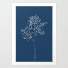 Chrysanthemum Blueprint Art Print
