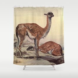 Vintage Guanacos Painting (1909) Shower Curtain