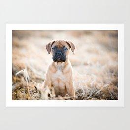 Bullmastiff Puppy Art Print