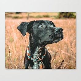 Wheatfield Dog //  Portrait If These Eyes Could Talk .. Stunning Rusty Blues Canvas Print