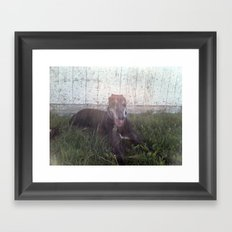 Sunny days - Greyhound photo Framed Art Print