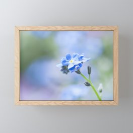 Forget-me-not in LOVE - Springflower Flowers Floral Framed Mini Art Print