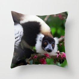 Black and White Ruffed Lemur, Madagascar Throw Pillow