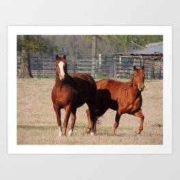 Happy-Horses-Hoofing-It Art Print