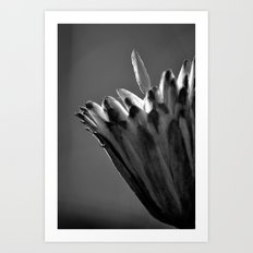 Tulip Tree Fruit Art Print