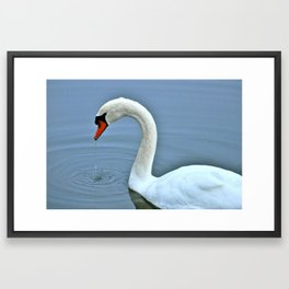 Swan IV Framed Art Print