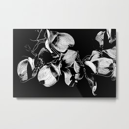 Dogwood Tree Flowers (black background) Metal Print