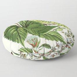 Humulus lupulus (common hop or hops) - Vintage botanical illustration Floor Pillow