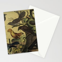 011 coracias garrula Greater Bird of paradise rupicola Hill Myna Common Grackle10 Stationery Cards