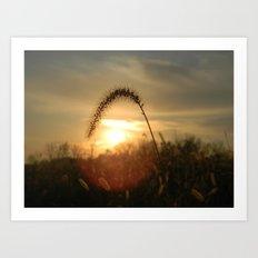 Field Grass Sunrise Art Print