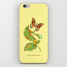 Papilio insulaeinfanum praegrandis iPhone & iPod Skin