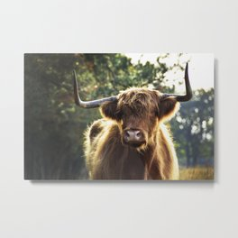 Highland Cow in the wildernis | Photography | Art print | Photo print Metal Print