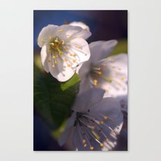 White Blossom Canvas Print