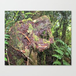 The CRY of Death - Tradewinds trail marvels on El Yunque rainforest PR Canvas Print