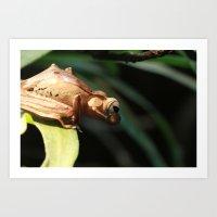 Borneo Eared Frog Art Print