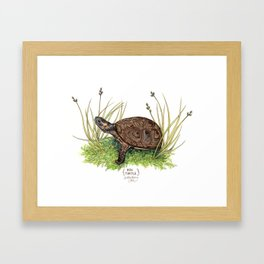 Bog Turtle Framed Art Print